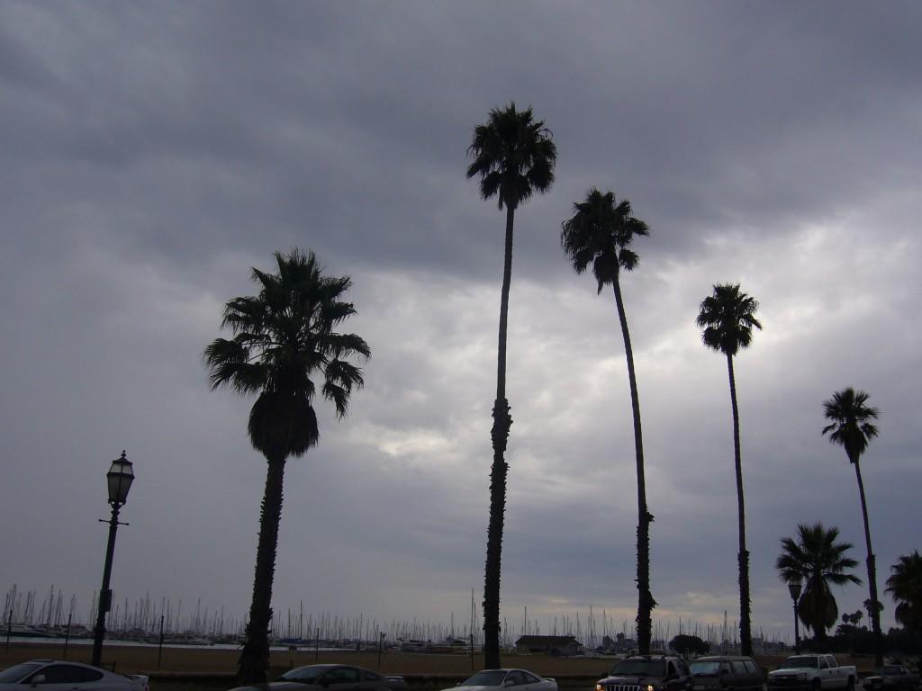 santa-barbara-palm-trees