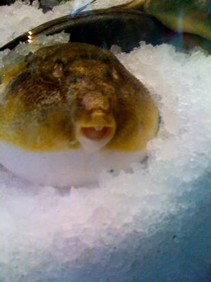 fish in eastern market