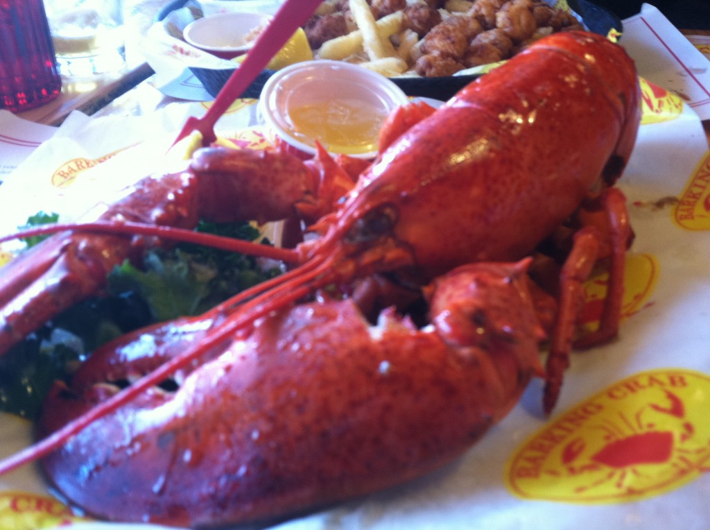 barking crab lobster