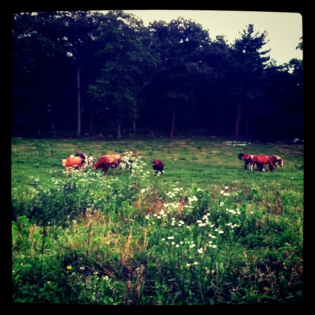 South Natick Farm