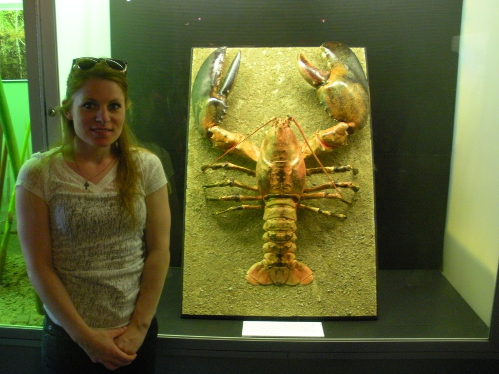 lobster exhibit